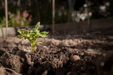 Soil sprouting. Photo by David Goehring