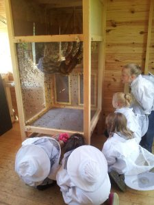 School visit to Bungay Community Bees' observation hive by Elinor McDowell