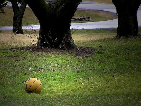 tree and basketball