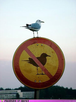No birds allowed here