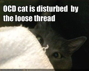 silly ocd cat picture