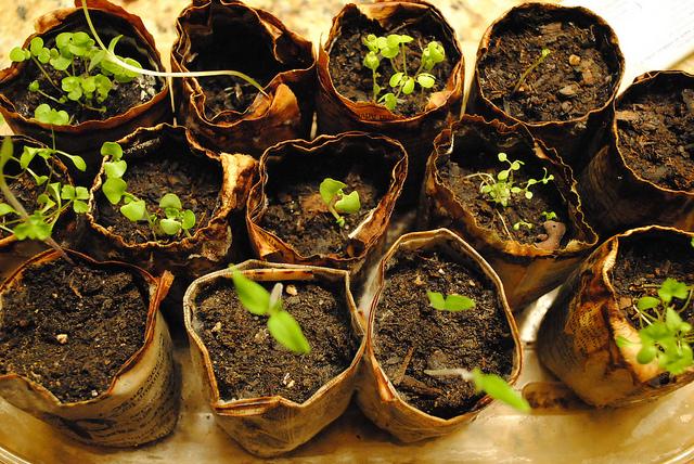 Seedlings - Photo by Laurie Hulsey - Flickr