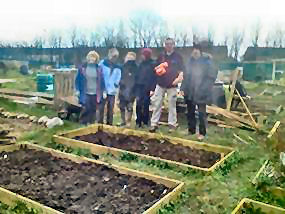 workgroup in front of raised bed