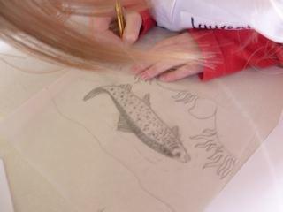 Drawing a salmon