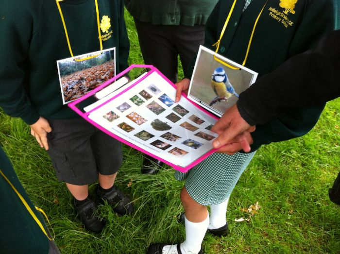 Using a species guide to explore life in an oak tree
