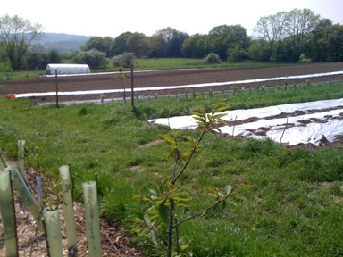 cultivated open field with polytunnel