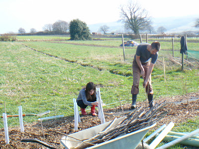 Two young people plant hedge plants on the edge of a field