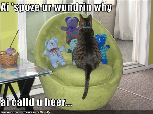 silly cat picture of cat talking to teddy bears