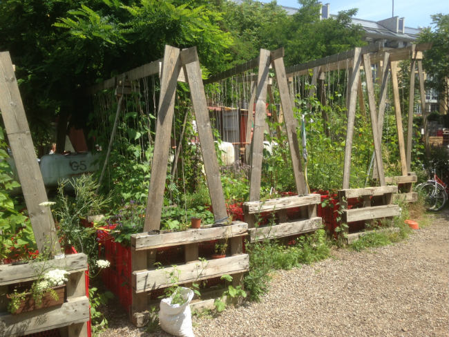 How about these for sturdy runner bean supports?