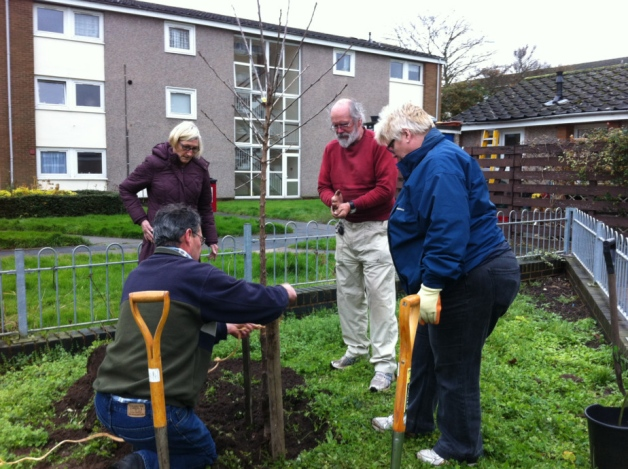 Derrick Knight (kneeling) with community volunteers planting cherry trees at Christine Ledger Square in Leamington. Photo: Leamington Spa Courier.