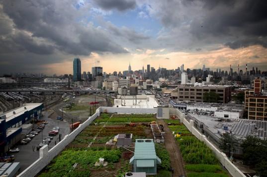 Brooklyn Grange Farm, New York.