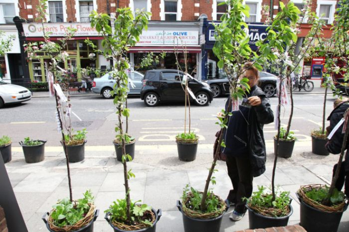 Trees on Kilburn High Road.  Photo: Jonathan Goldberg