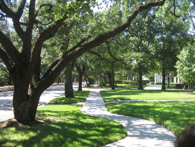 Tree lined streets give Houston a great microclimate in spite of the hot summers.