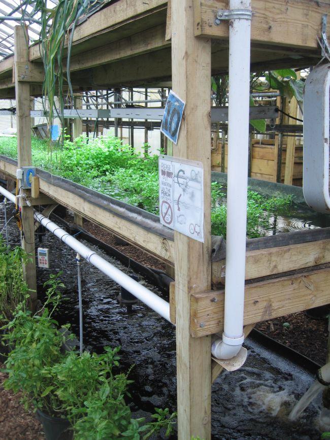 Fish below, veg above, nutrients cycled between them. Genius.