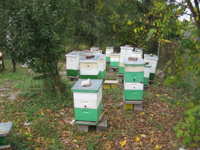 Bee hives.