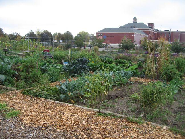 View across Alice's Garden.