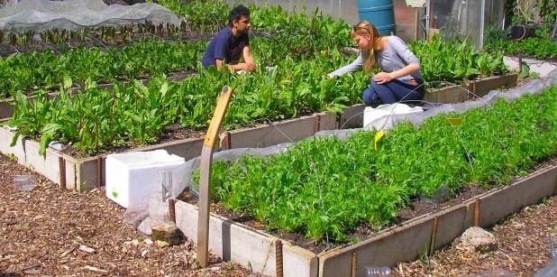 One of Growing Communities' market gardens in Hackney.