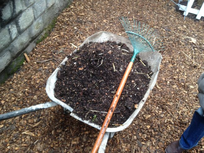 Compost heading for the beds.