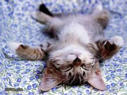 exhausted kitten flat out