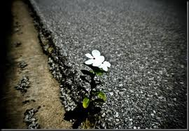 flower growing through asphalt