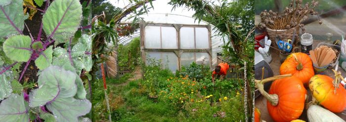 Market garden banner - Russian kale, Ann working in front of polytunnel, pumpkins
